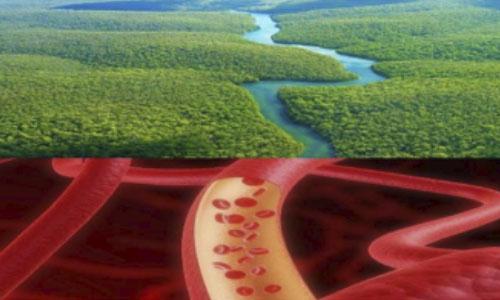 Agua y sangre, vidas paralelas